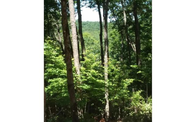 LOT23 Chicory Dr. East, Blairsville, GA 30512 (MLS #278780) :: RE/MAX Town & Country