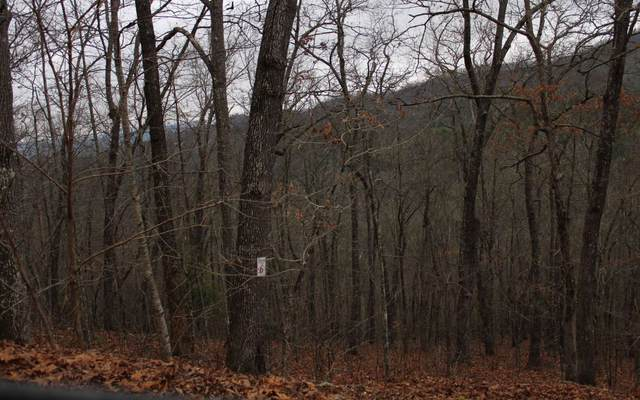 7 Thunder Road, Hayesville, NC 28904 (MLS #295223) :: Path & Post Real Estate