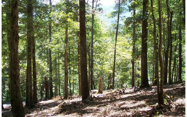 22 Thunder Road, Hayesville, NC 28904 (MLS #295176) :: RE/MAX Town & Country