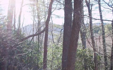 #109 Big Pine Drive, Hiawassee, GA 30546 (MLS #210694) :: Path & Post Real Estate