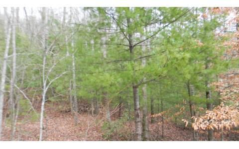 # 6 Bald Eagle Drive, Young Harris, GA 30582 (MLS #225910) :: RE/MAX Town & Country