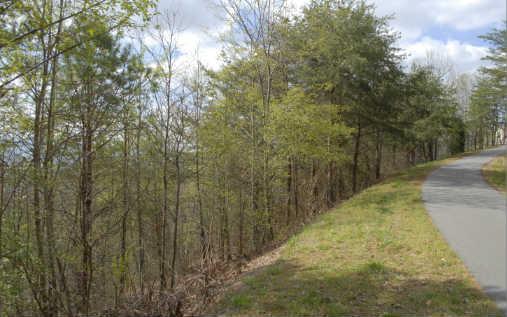 LOT 9 Golden Oak Estates,, Warne, NC 28909 (MLS #235776) :: RE/MAX Town & Country