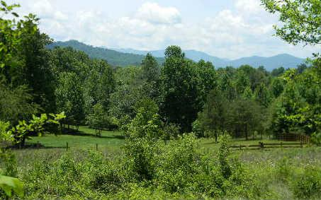 LOT29 Hidden Forest Lane, Hayesville, NC 28904 (MLS #237716) :: RE/MAX Town & Country