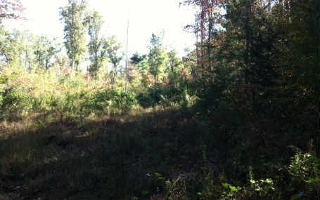 63 Bear Paw Church, Murphy, NC 28906 (MLS #242901) :: RE/MAX Town & Country