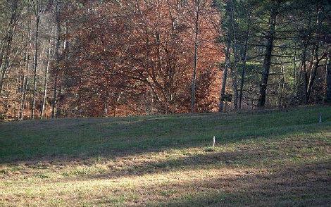 LT 1 Point Overlook Trail - Photo 1
