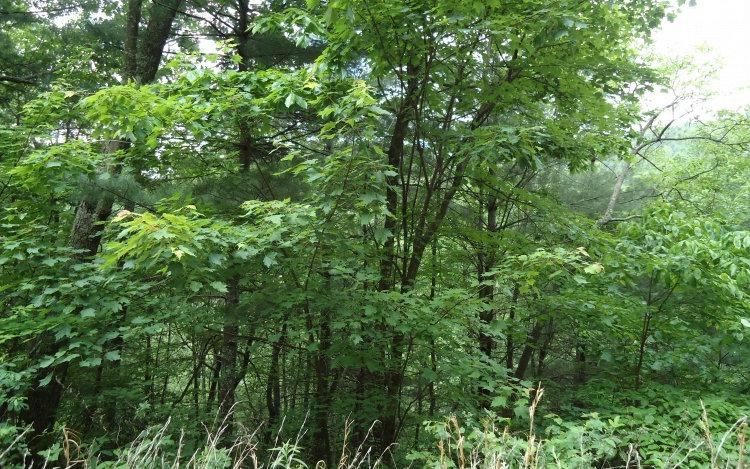 LOT10 Emerald Creek - Photo 1