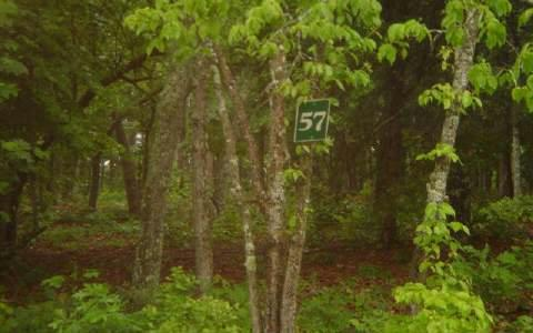 LT 57 Arden Acres, Blairsville, GA 30512 (MLS #256992) :: RE/MAX Town & Country