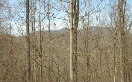 LT 17 Wildwood Brook, Blairsville, GA 30512 (MLS #257375) :: RE/MAX Town & Country