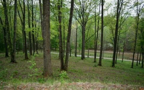 Pine Ridge Dr. Lot 2, Warne, NC 28909 (MLS #258252) :: RE/MAX Town & Country
