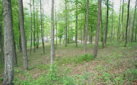 Pine Ridge Dr. Lot 3, Warne, NC 28909 (MLS #258254) :: RE/MAX Town & Country