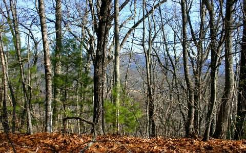 Crockett Mtn-6.55 Ac, Hayesville, NC 28904 (MLS #262339) :: RE/MAX Town & Country