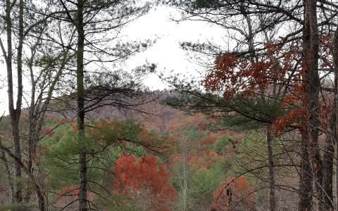 LOT 5 Cabin Fever Retreat, Suches, GA 30572 (MLS #264082) :: RE/MAX Town & Country
