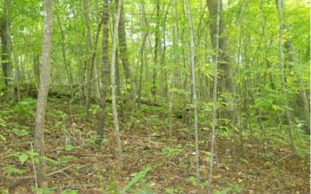 LOT14 Northside Mountain, Suches, GA 30572 (MLS #266865) :: RE/MAX Town & Country