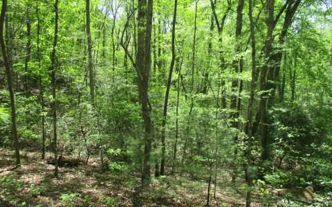 LT 20 Fields Branch, Blairsville, GA 30512 (MLS #267745) :: RE/MAX Town & Country