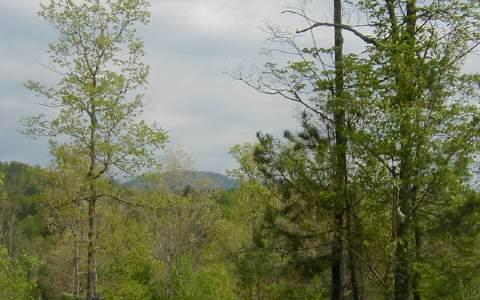 LT 13 Walnut Hills Estates, Mineral Bluff, GA 30559 (MLS #268153) :: RE/MAX Town & Country