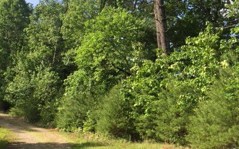 1.87 Acres Gobblers Knob, Suches, GA 30572 (MLS #268392) :: RE/MAX Town & Country