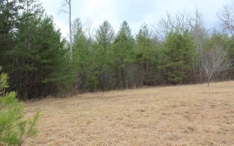 LOT 5 Pine Lane, Mineral Bluff, GA 30559 (MLS #269510) :: RE/MAX Town & Country