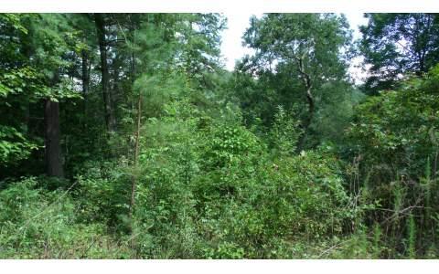 Richlen Ridge, Morganton, GA 30560 (MLS #271006) :: RE/MAX Town & Country