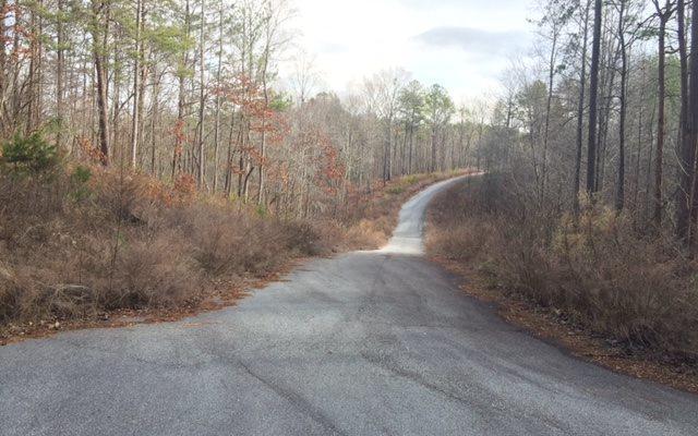 Ivy Cove Lane, Ellijay, GA 30536 (MLS #271099) :: RE/MAX Town & Country