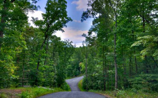 LT 60 Ivy Ridge, Blue Ridge, GA 30513 (MLS #272965) :: RE/MAX Town & Country