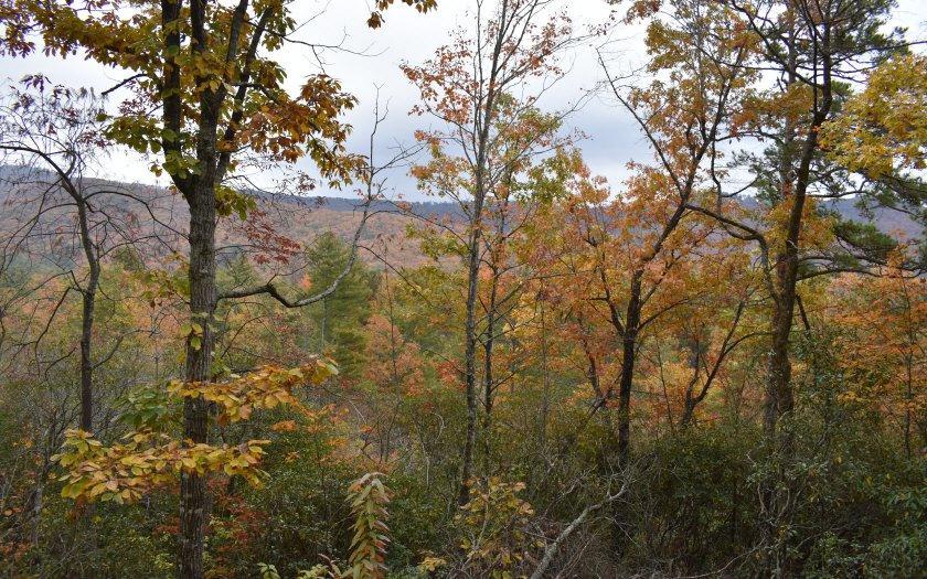 Camp Creek - Photo 1