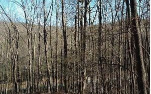 LT 25 Turkey Trot Trail, Talking Rock, GA 30175 (MLS #274134) :: RE/MAX Town & Country