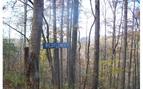 LOT 7 Wild Flower Trail, Suches, GA 30572 (MLS #274246) :: RE/MAX Town & Country