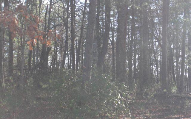 Farmer Estates, Mineral Bluff, GA 30559 (MLS #274574) :: RE/MAX Town & Country
