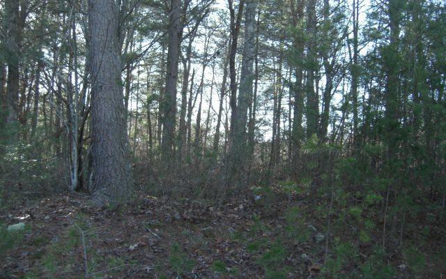 Farmer Estates, Mineral Bluff, GA 30559 (MLS #274575) :: RE/MAX Town & Country