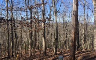 LOT 1 Birchwood Trails, Blairsville, GA 30512 (MLS #275615) :: RE/MAX Town & Country