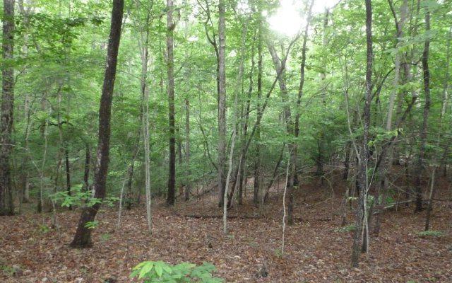 Mustang Trail, Blairsville, GA 30512 (MLS #276639) :: RE/MAX Town & Country