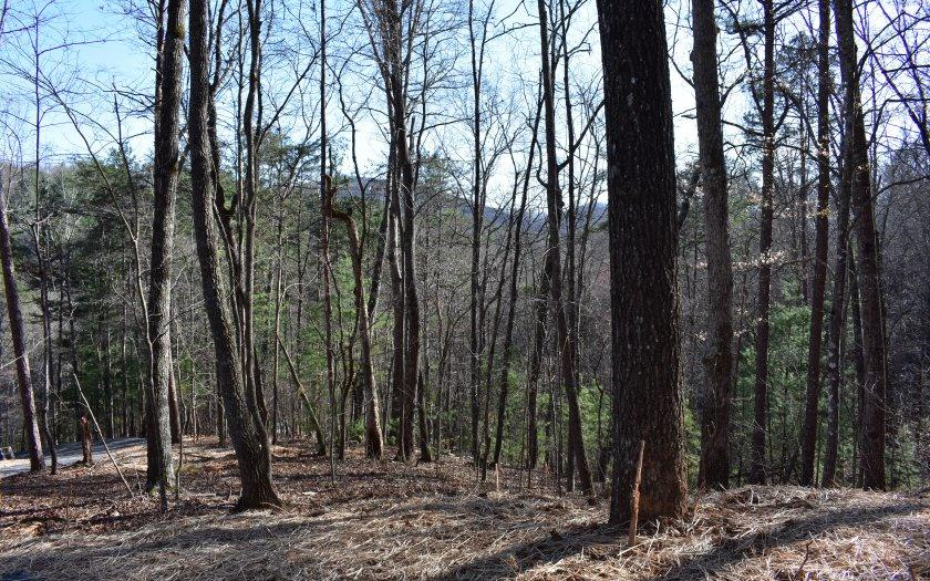 Cedar Barn - Photo 1