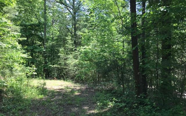 Toccoa River Forest, Mineral Bluff, GA 30559 (MLS #278490) :: RE/MAX Town & Country