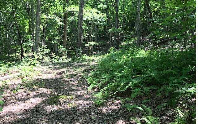 Falls At Riverside, Hiawassee, GA 30546 (MLS #279868) :: Path & Post Real Estate