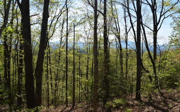 LT 42 Wilderness Creek Way - Photo 1
