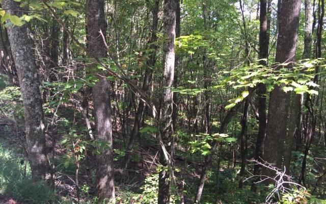 LT 42 Woodland Trail, Epworth, GA 30541 (MLS #287801) :: RE/MAX Town & Country