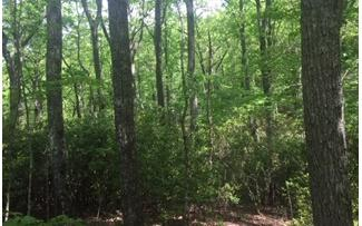 LOT 9 Cook Mountain Drive, Blairsville, GA 30512 (MLS #287847) :: RE/MAX Town & Country