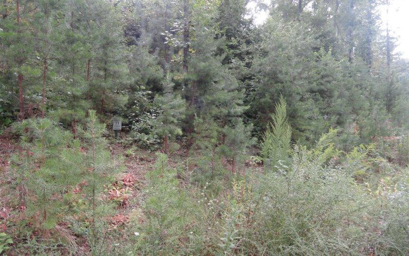 LT 11 Lower Fox Trail - Photo 1