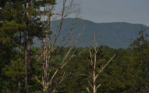 186 Austin Mtn Rd, Copperhill, TN 37317 (MLS #288905) :: RE/MAX Town & Country