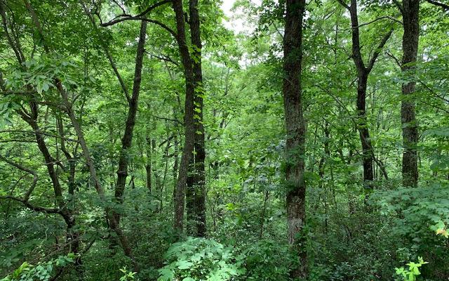 LT50A Eagles View, Hayesville, NC 28904 (MLS #289202) :: Path & Post Real Estate
