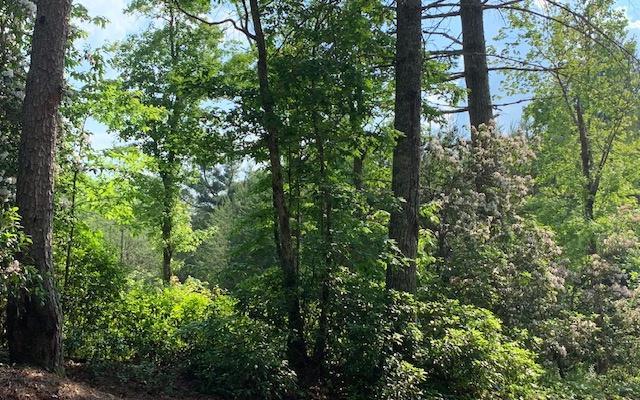 LOT 6 White Pine Ridge, Hayesville, NC 28904 (MLS #289205) :: RE/MAX Town & Country