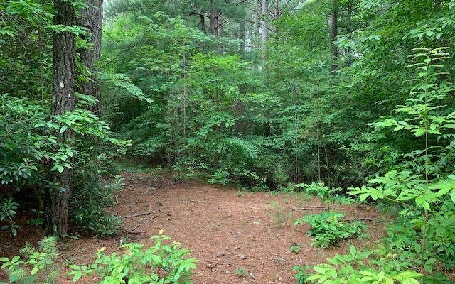 Rebecka Lane, Blairsville, GA 30512 (MLS #289586) :: Path & Post Real Estate