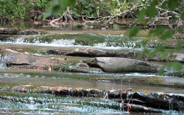 LT54 Mountain Creek Hollo, Talking Rock, GA 30175 (MLS #289708) :: RE/MAX Town & Country