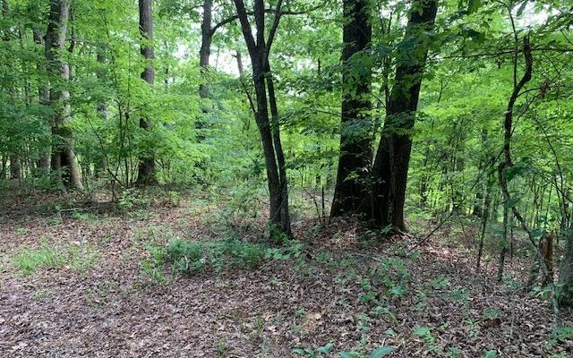# 28 Wolf Creek Estates, Mineral Bluff, GA 30559 (MLS #289907) :: RE/MAX Town & Country