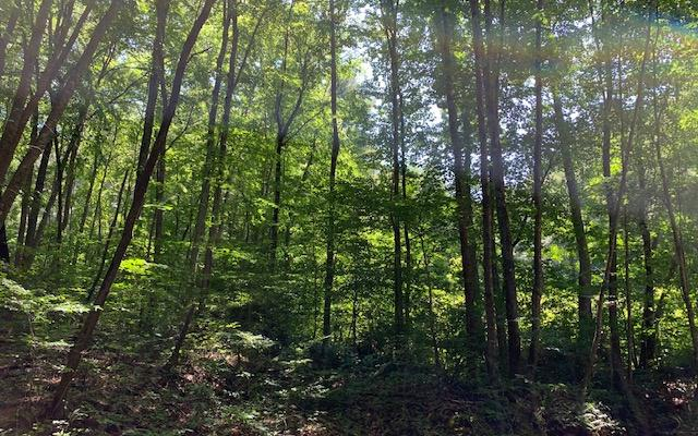 LT 14 Shepherd Dr, Shiloh, Hayesville, NC 28904 (MLS #290464) :: RE/MAX Town & Country