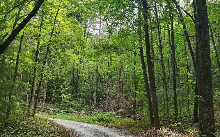 Mountain View Lane - Photo 1