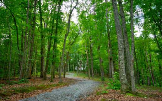 LT 34 Ivy Ridge, Blue Ridge, GA 30513 (MLS #291964) :: Path & Post Real Estate
