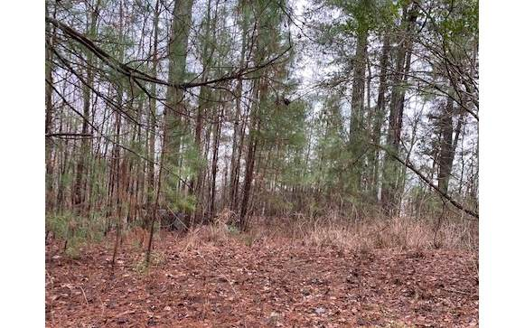 LT 8 Wildcat Creek Rd, Ellijay, GA 30540 (MLS #295364) :: RE/MAX Town & Country