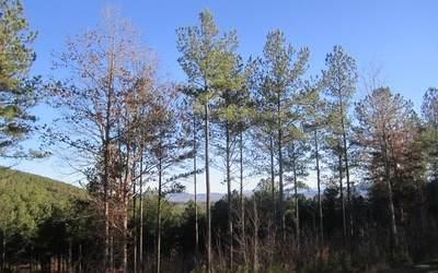LT 60 Ridge Peak View - Photo 1