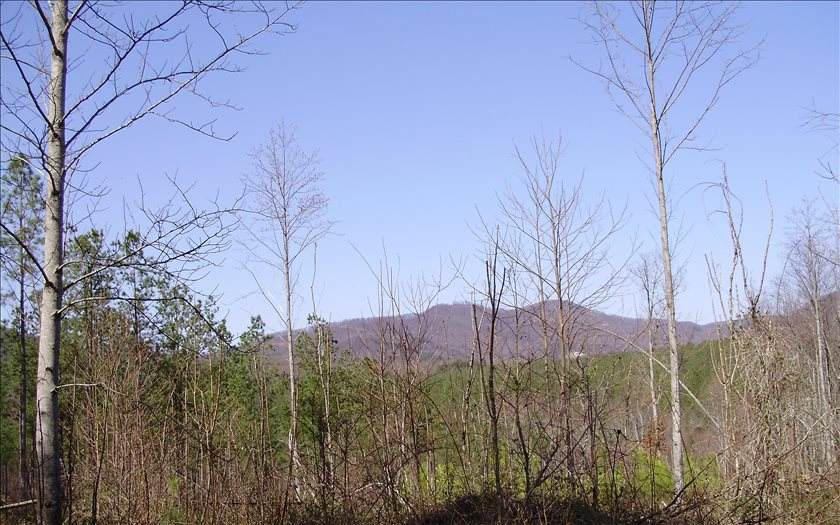 5 AC Streamside Lane - Photo 1